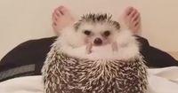 Bilder von Tieren, bei denen du zweimal hinsehen musst