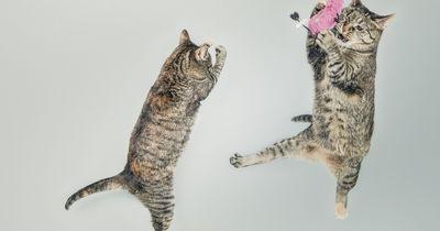 Warum prügeln sich Katzengeschwister plötzlich?