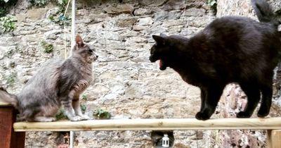 So stellst du Katzen einander vor, ohne dass sie sich direkt hassen