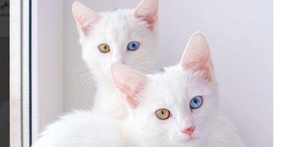 Das sind die außergewöhnlichsten Katzen-Zwillinge