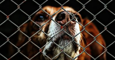 In Deutschland werden während der Sommerferien Tausende Tiere ausgesetzt