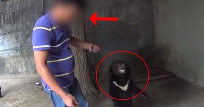 PETA-Aktivist filmt Zustände in chinesischen Zirkussen