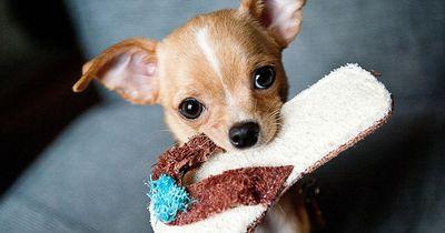 Top 10: Dies sind Deutschlands beliebteste Hunderassen