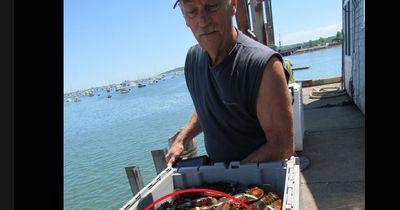 Hummerfischer macht unglaublichen seltenen Fund