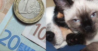 Die beliebtesten Haustiere und was sie kosten