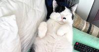 Das sind die skurrilsten Fakten über Katzen