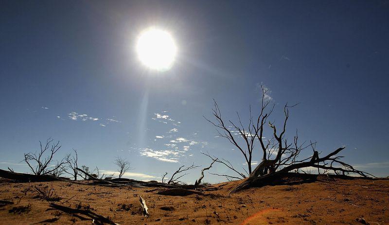 Im Kampf gegen eindringende Tiere geht Australien besonders drastisch vor
