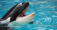 Endlich: SeaWorld beendet Orca-Shows!