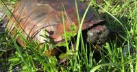 Tierquäler bemalen Schildkrötenpanzer