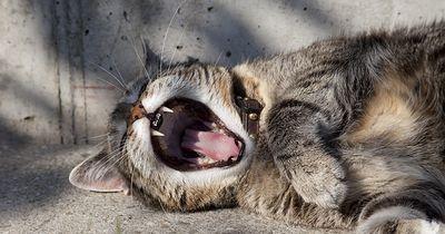 Deshalb schlafen Katzen so viel
