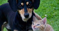 Bist du ein Hunde- oder Katzenmensch?