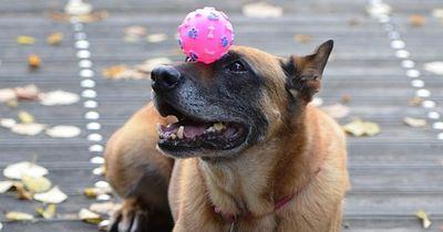 So lernt der Hund ganz einfach coole Tricks