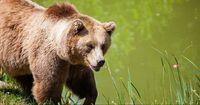 Quiz: Wie gut kennst du dich im Reich der Wildtiere aus?