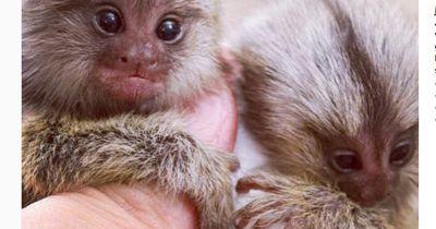 Kanntest du schon die winzigsten Tierchen der Welt?
