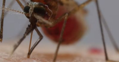 Ein Mückenstich im Close-Up ist das Ekligste, was du heute sehen wirst