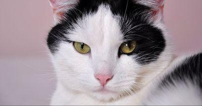 Diese Katze wurde 8 Jahre vermisst. Jetzt ist sie wieder aufgetaucht!