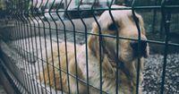 Ein Streuner weigerte sich, sich von Tierschützern retten zu lassen