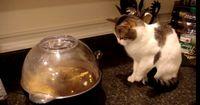 Diese Katze wird kein Popcorn-Fan mehr...