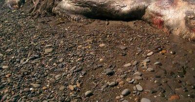 Am Strand von Sibirien wurde eine mysteriöse Kreatur entdeckt