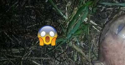 In ihrem Garten fand sie ein seltsames, glibberiges Alien