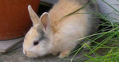 Das sind die beliebtesten Haustiere Deutschlands