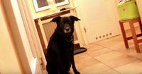 Dieser Hund ist mega-unheimlich!