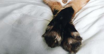 Ein sehr ungewöhnliches Haustier wurde zum Instagram-Star
