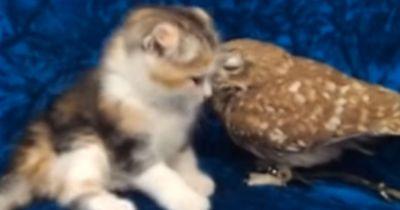 Diese tierische Freundschaft ist total kurios!