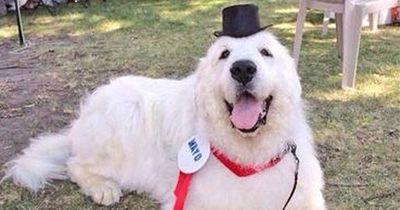 Außergewöhnlich: Hier ist ein Hund zum dritten Mal Bürgermeister