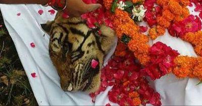 Eine der ältesten Tigerinnen der Welt ist gestorben