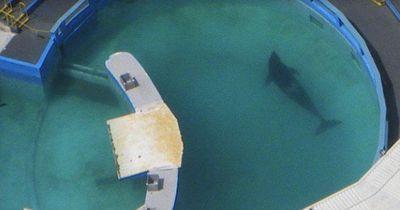 Durch fatale Haltung ist das der kränkste Orca der Welt