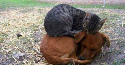 Diese Katzen können überall schlafen