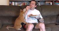 So schwer kann Essen mit einer Katze in der Nähe sein!