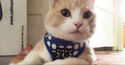 Diese Katze hat fast ihr ganzes Leben drinnen verbracht...