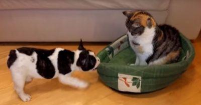 Ein Welpe will sein Bett zurück - nur interessiert das die Hauskatze überhaupt nicht!