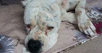 Giftköder-Alarm: Hier treiben sich besonders viele Hundehasser rum