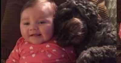 Dieser Hund rettet ein Baby vor dem Feuer