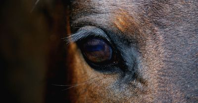 Blutiges Drama im Pferdestall