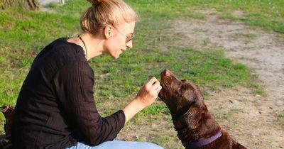 Was ist dem Hund wichtiger: Lob oder Leckerli?