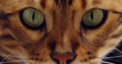 Diese außergewöhnliche Katze begeistert die ganze Welt