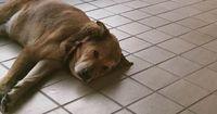 Ein Hund litt nach dem Tod seines besten Freundes 2 Jahre an Depressionen