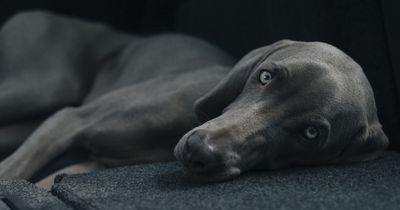Dieser Stoff ist in vielen Lebensmitteln und tödlich für unseren Hund