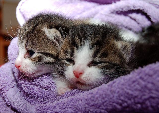 Das sind die beliebtesten Katzenrassen