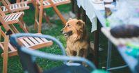 Was Hunde auf keinen Fall essen dürfen