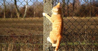 Was tun, wenn die Katze entläuft?