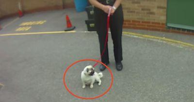 Ihr Hund wurde gestohlen...