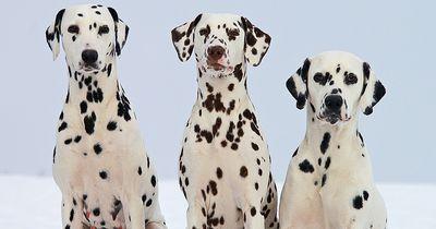 Studie enthüllt: Verstehen Hunde wirklich, was wir sagen?