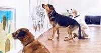 Dogs Only: Künstler eröffnet eine Ausstellung für Hunde