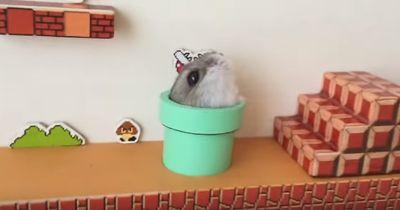 Hamster spielt Super Mario...