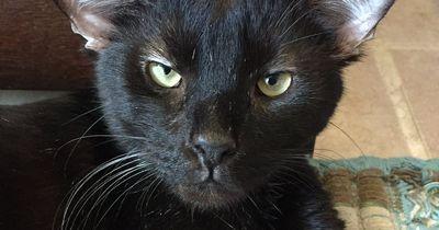 Schon einmal eine Katze mit 4 Ohren gesehen?